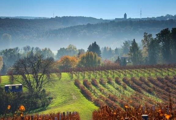 Der Zeitzer Forst. Eine alte Kulturlandschaft