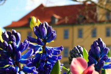Saisonstart im Schlosspark Moritzburg Zeitz