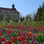 Schlosspark Zeitz. Blühender Gartentraum.
