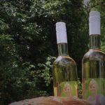 10. Zeitzer Weinfest: Heute Abgesagt!