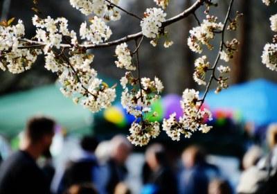 Blütenduft und viele Menschen