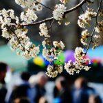 Frühlingslust und Weiberwirtschaft