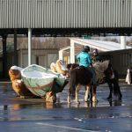 Die Glasarche 3 hat Ponybesuch