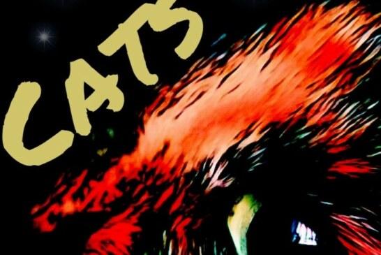"""""""CATS"""", 18., 19., und 20.09., Hyzet"""