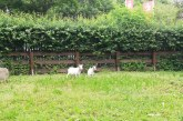 Tierisches im Gartentraum