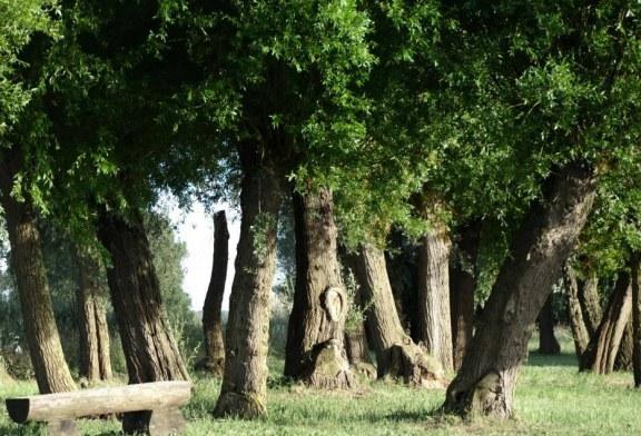Gießpaten für Bäume gesucht